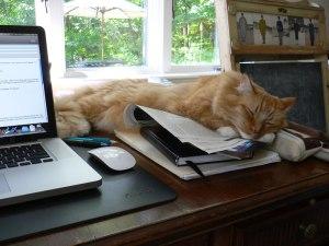 Horus sleeping on my work
